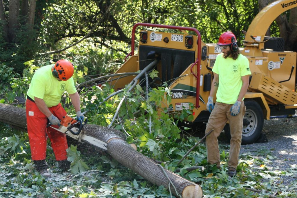 Hedge removal north shore