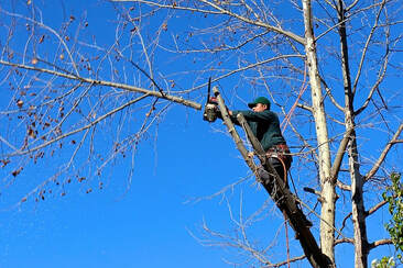 North shore Tree pruning