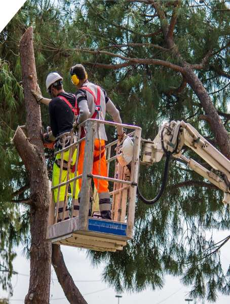 tree trimming north shore