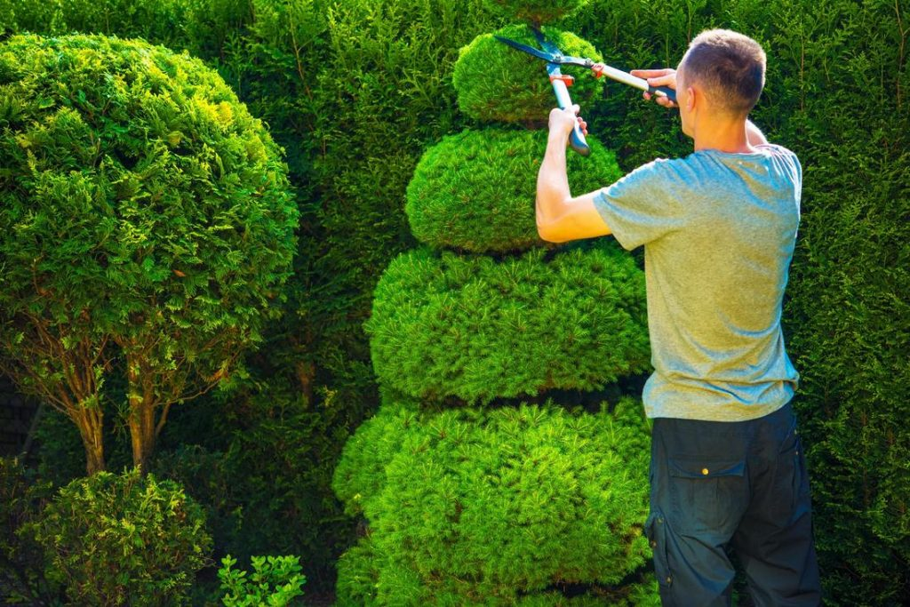 hedge trimming north shore