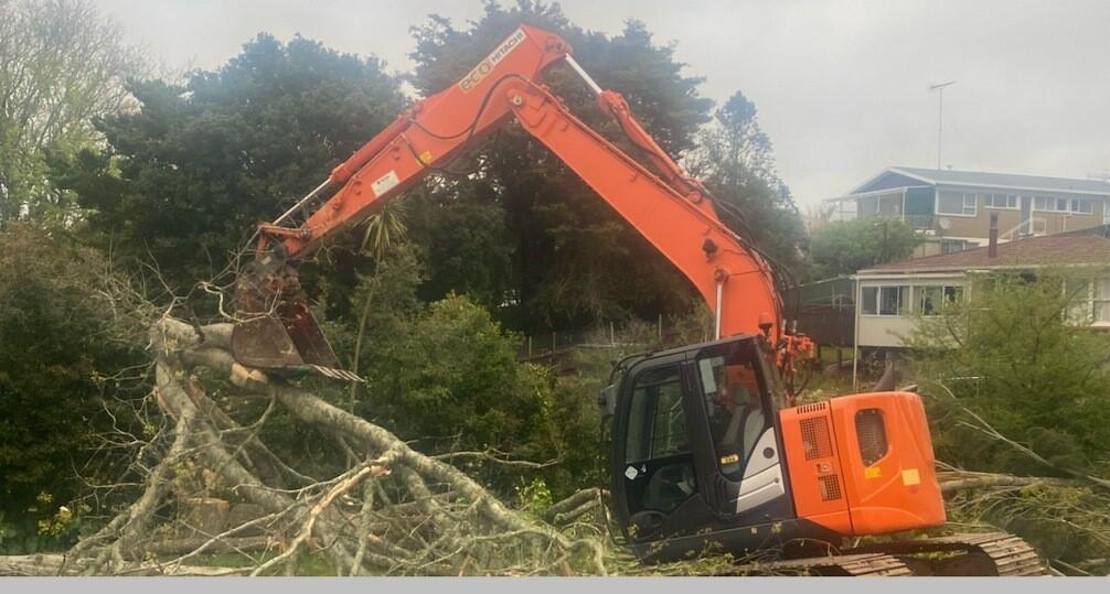North shore tree service