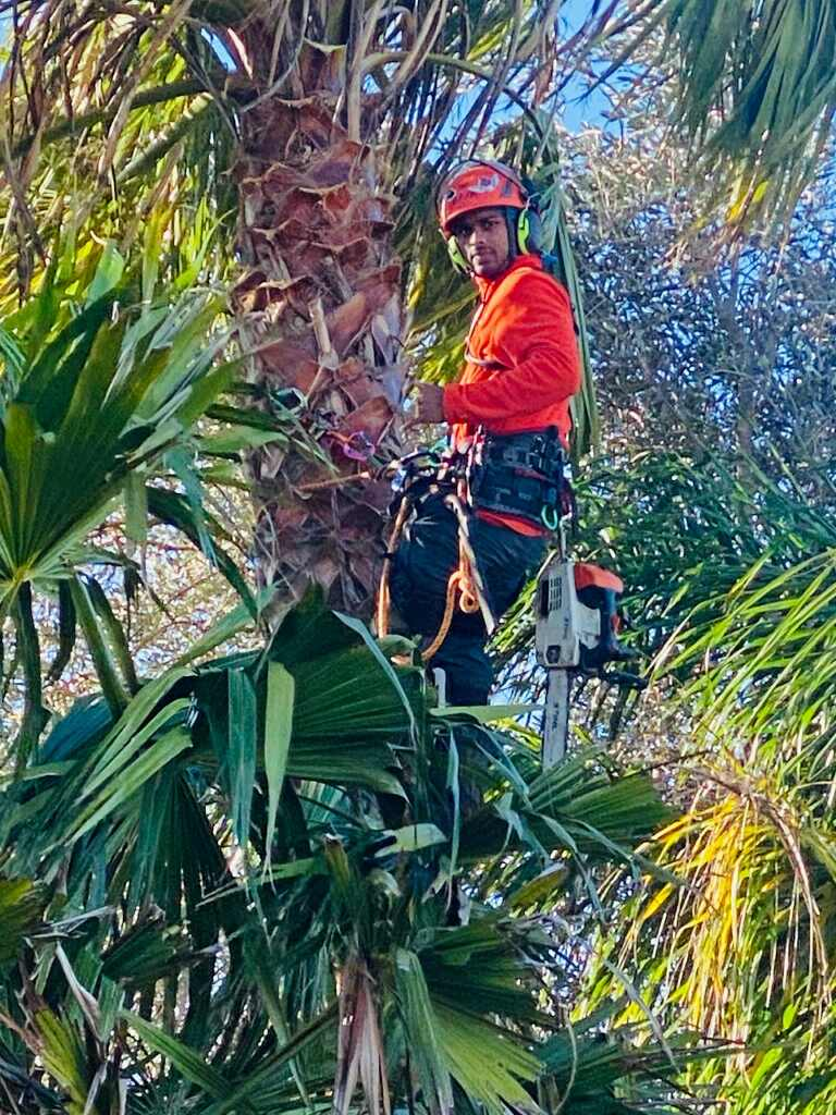 tree removal services north shore