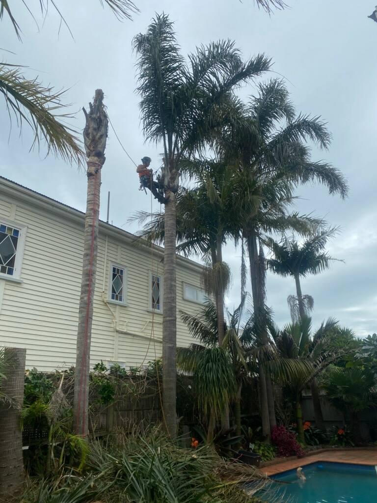 tree service north shore